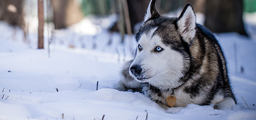 CHARM OF NORD - Dog Breeders
