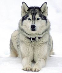 Jonathan - Dog Breeders