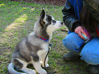 Cannon's Country Kennel - Dog Breeders