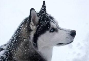 Pups Wanting Good Homes - Dog Breeders