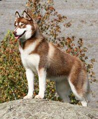 DELIGHTFUL LITTLE ANGELS - Dog Breeders