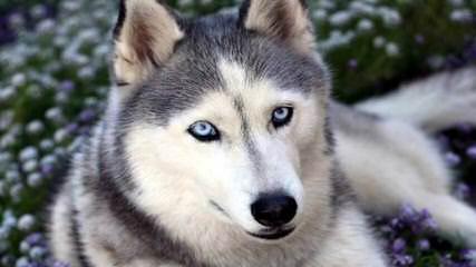Rebecca Mendoza - Dog Breeders