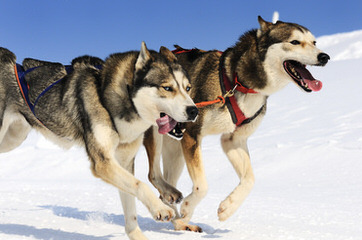 Sullivan - Dog Breeders