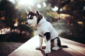 Hells Hollow Huskies - Dog Breeders