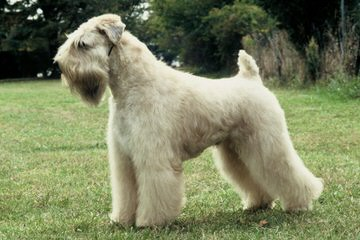 Dan & Evelyn Ryan - Dog Breeders