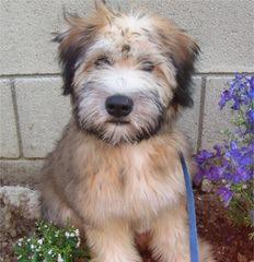 Kayo's Kennel - Dog Breeders
