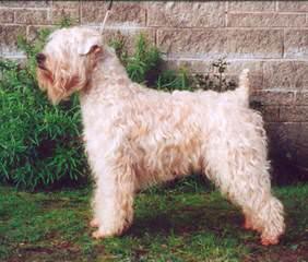 Felicia's Swheaties - Dog Breeders