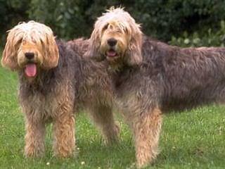 Matts Puppies - Dog Breeders