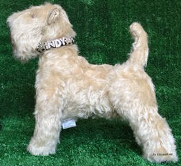 Wheaten Terrier – Non-Shedding - Dog Breeders