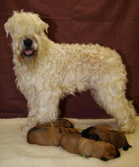 Friends For Life - Dog Breeders