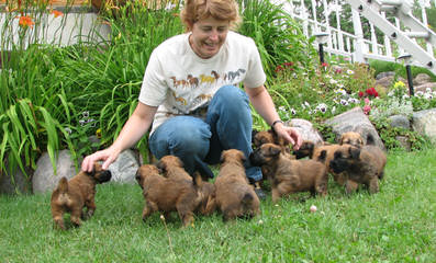 Zulusky Spanish Waterdogs - Dog Breeders