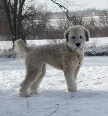Linda Sprague - Dog Breeders