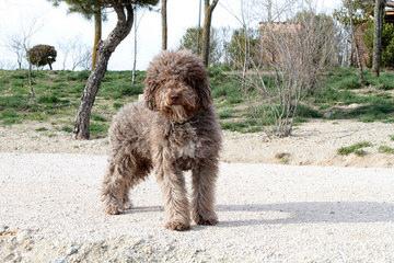 De Fabio Kennel - Dog Breeders