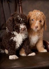 Casa Hidalgo Kennels - Dog Breeders