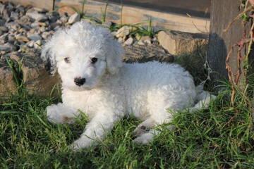 Casa De Rancho - Dog Breeders