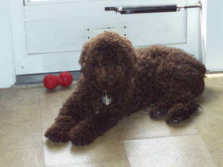 Elindalo - Dog Breeders