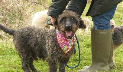 Briarlow - Dog Breeders