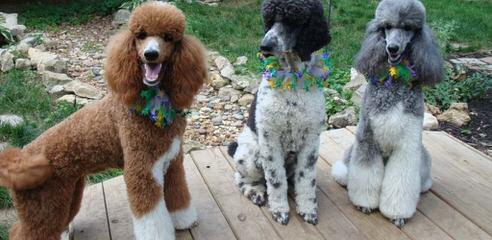 Waymaker Kennel - Dog Breeders