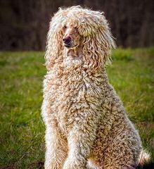 Fabiola - Dog Breeders