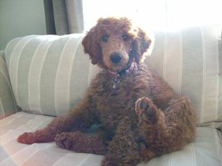 Robinson's Home - Dog Breeders