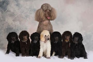 """Ma """"N"""" Paw kennel - Dog Breeders"""