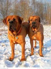 BIRENGO - Dog Breeders