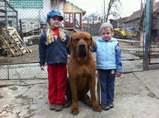 Merramice Tosa's - Dog Breeders