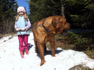 Tosa Inu – Touryukai Kennels - Dog Breeders