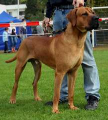 The Tosaken Gold's Kennel - Dog Breeders