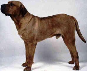 Aurora Kennels - Dog Breeders