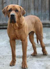 Tosa Centrum Kennel - Dog Breeders