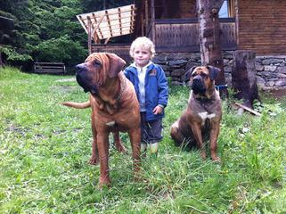 TOBIGERI Tosa Inu kennel - Dog Breeders