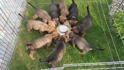Asahi Masaru - Dog Breeders