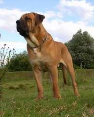 The Tosaken Gold's Kennel - Dog Breeders