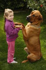 Toshi Tosas - Dog Breeders