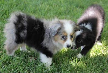Saddle Brook Farm - Dog Breeders