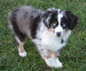 Sweetgrass Farm - Dog Breeders