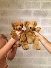 rachel roberts - Dog Breeders