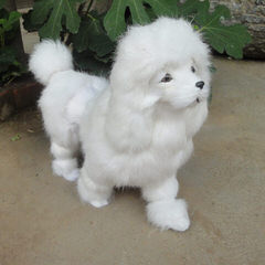 Toy Poodle Puppies For Sale - Dog Breeders