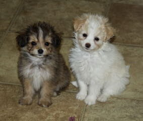 Country Home Kennel - Dog Breeders