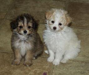 Rudd's Puppy Ranch - Dog Breeders