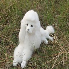 Sharon's Poodles - Dog and Puppy Pictures