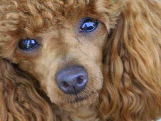 Leah's Lovable Pups - Dog Breeders