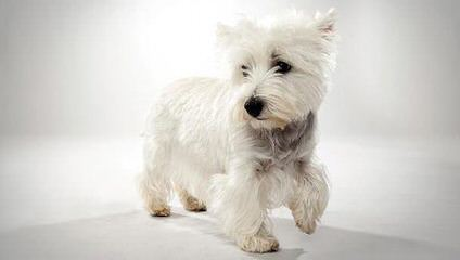 show me puppy tails - Dog Breeders