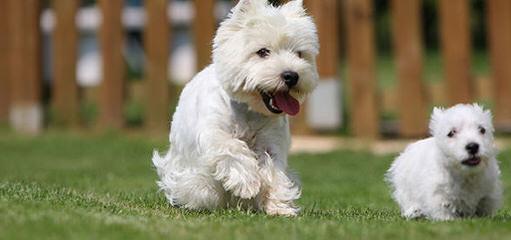 Van Gorgar - Dog Breeders