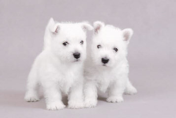 Silviu IOVAN - Dog Breeders