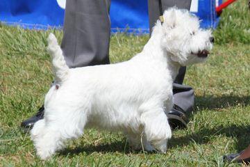 Southern Westies - Dog Breeders
