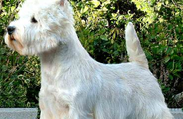 Brenda's Friends For Life - Dog Breeders