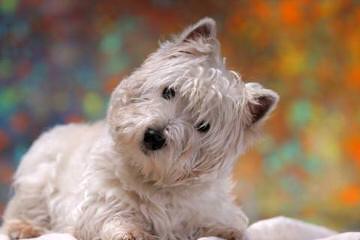 Debs Lil Pawz - Dog Breeders