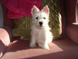 Spring Chateau Ranch Kennels - Dog Breeders